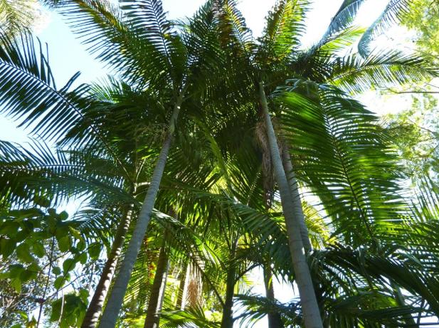 Shady Palm Trees