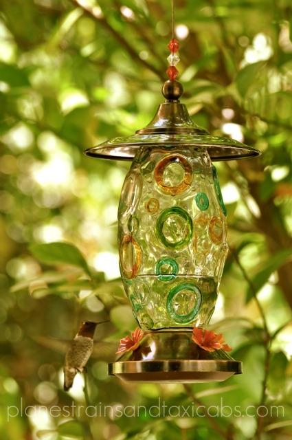 Favorite Photo Saturday – The Hummingbird