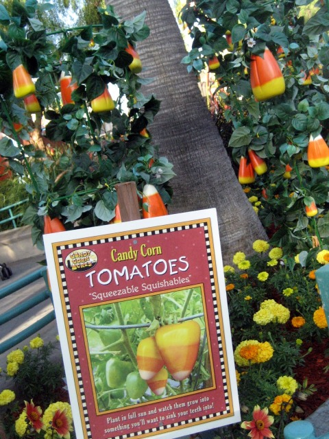 Disneyland Candy Corn - Simple Sojourns