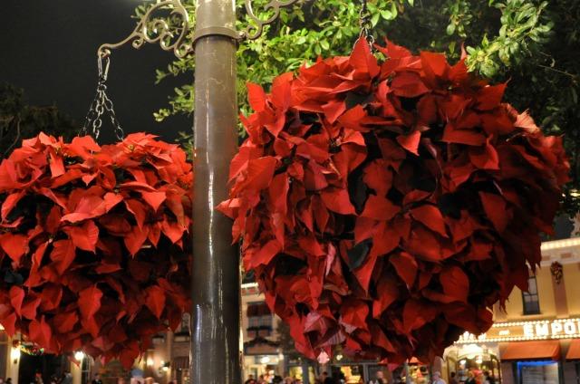 Disneyland Main Street Poinsettias