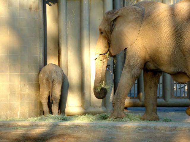 San Diego Safari Park Elephants - Simple Sojourns