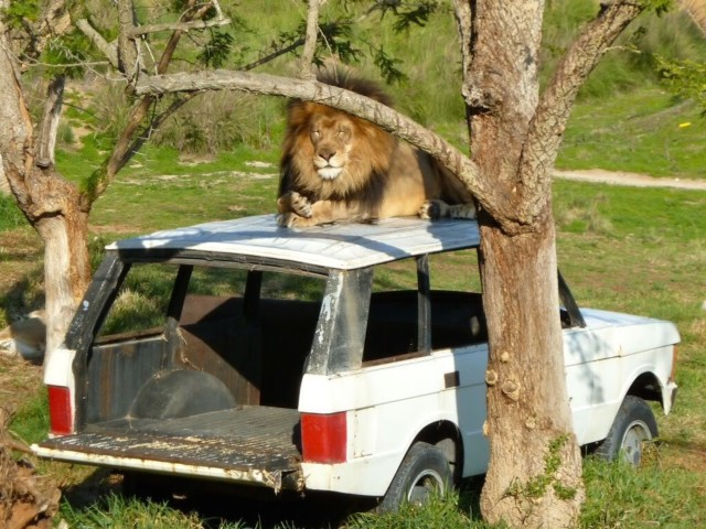 San Diego Safari Park Izu - Simple Sojourns