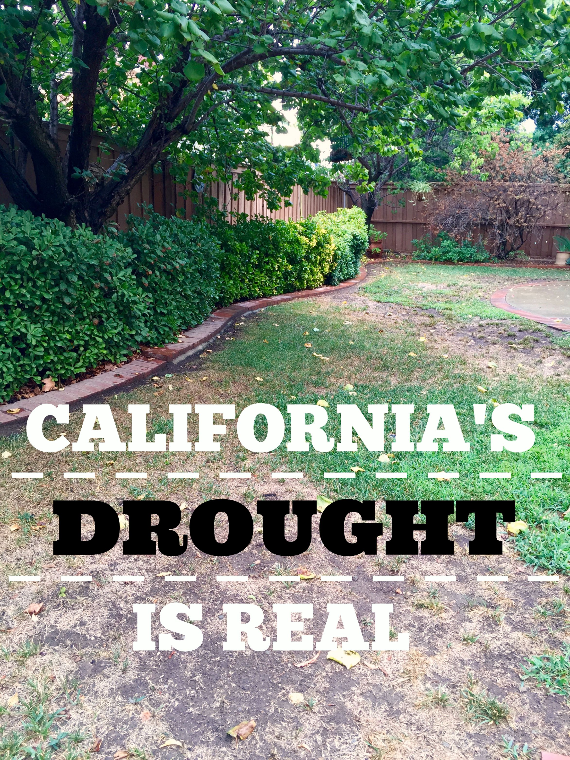 California is Dreaming about Water!