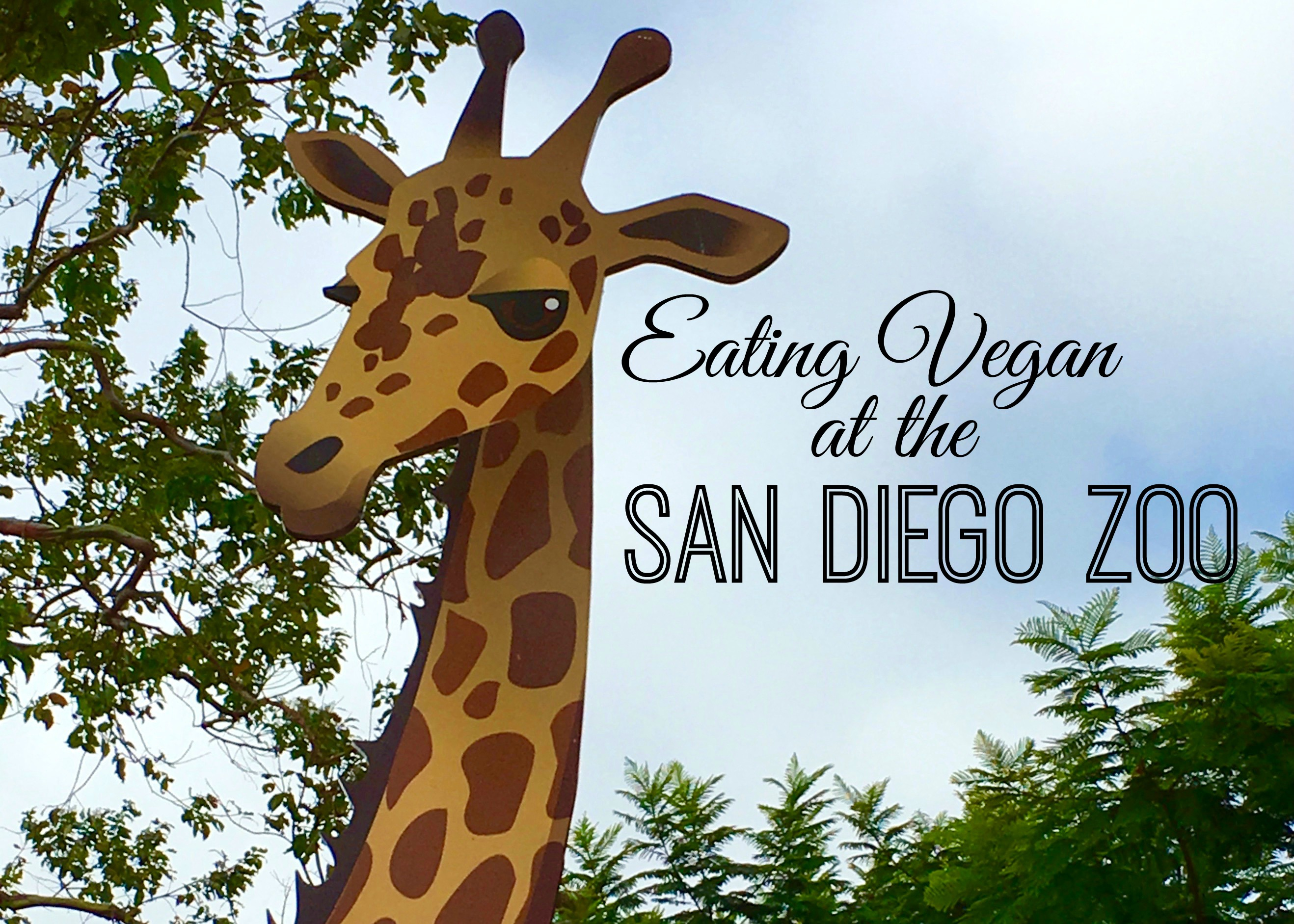 Eating Vegan at San Diego Zoo